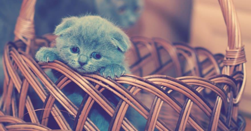 Image of sad-looking kitten in a basket