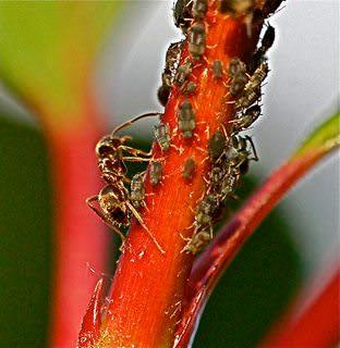 Ant managing dependencies