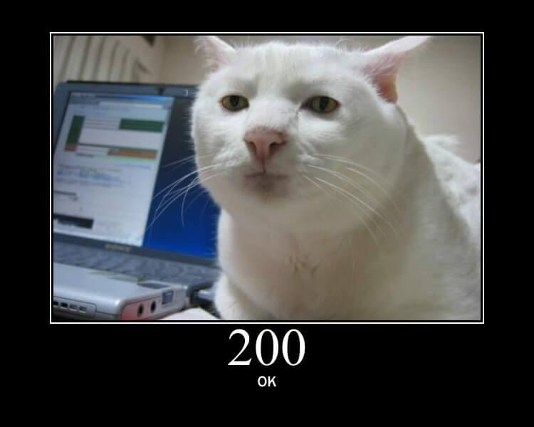 HTTP Cats 200 OK Status