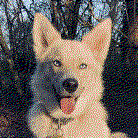 dog image dithered to just 5 colors