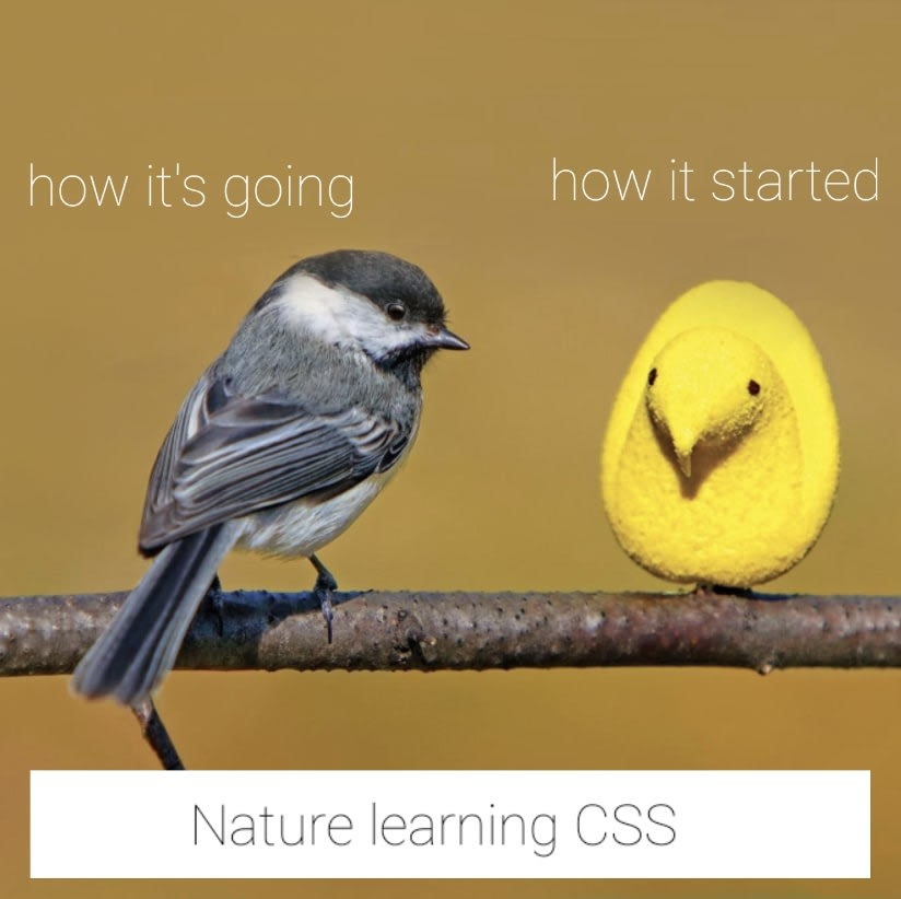 nature learning css