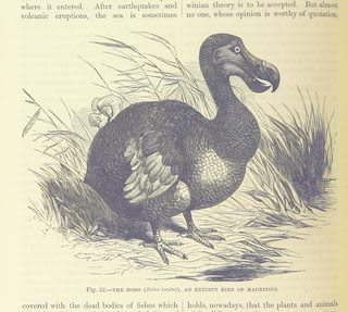 Dodos have ended their lifecycle