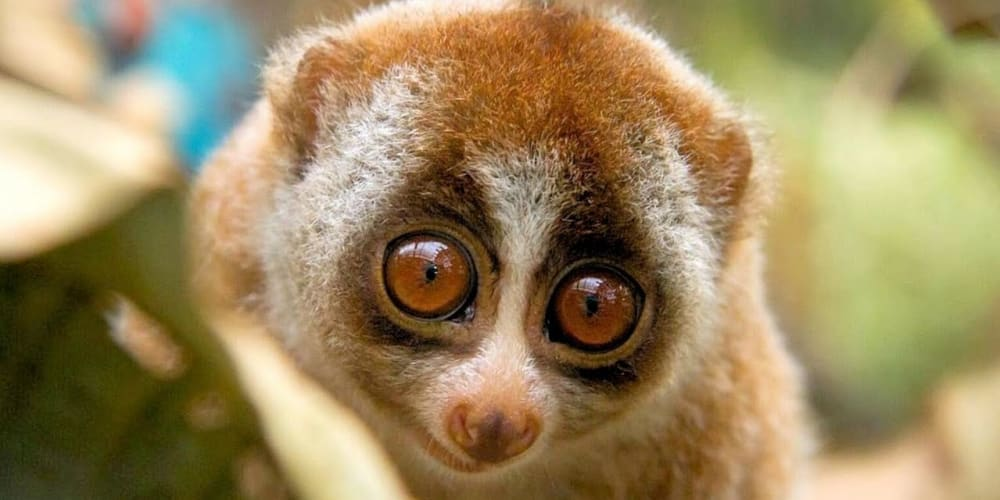 Boring a server to death - The Slow Loris Attack - DEV