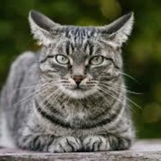 dragoncat profile picture