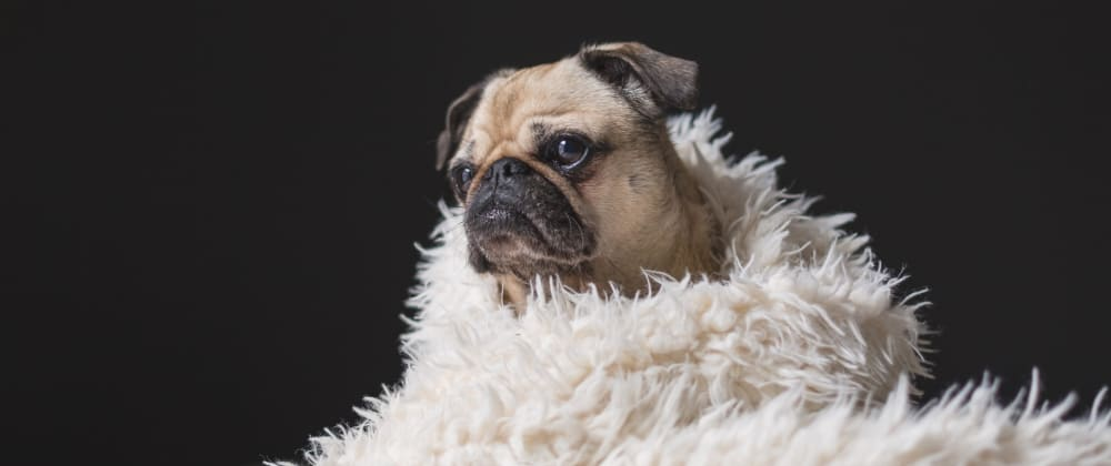 Cover image for How to use Pug and SCSS with Vue