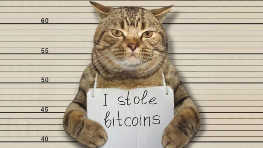 cat hacker