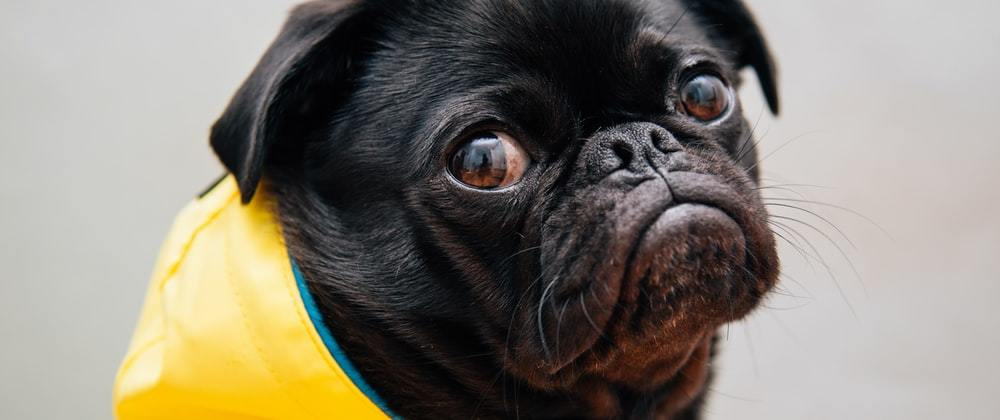 Cover image for Pug in 5 minutes