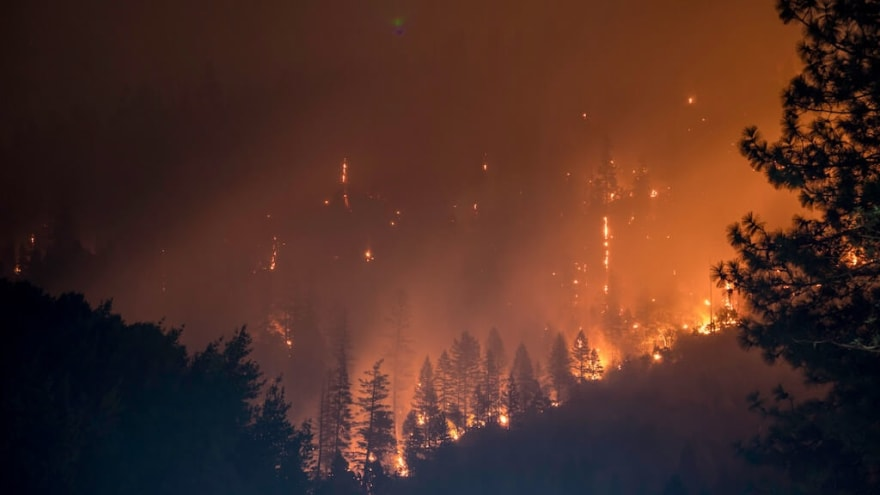 Picture of forest fire