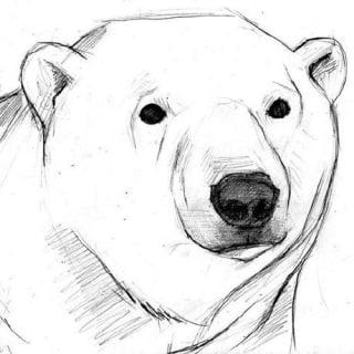 whit3bear profile