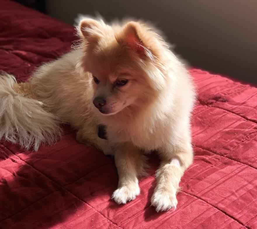 My dog Roscoe