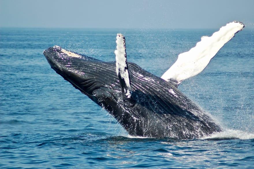Rare footage of a real live docker whale — Photo by [Todd Cravens](https://unsplash.com/@toddcravens?utm_source=medium&utm_medium=referral) on [Unsplash](https://unsplash.com?utm_source=medium&utm_medium=referral)