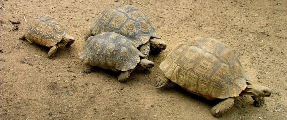Cover image for Floyd's algorithm Aka The Tortoise and the hare