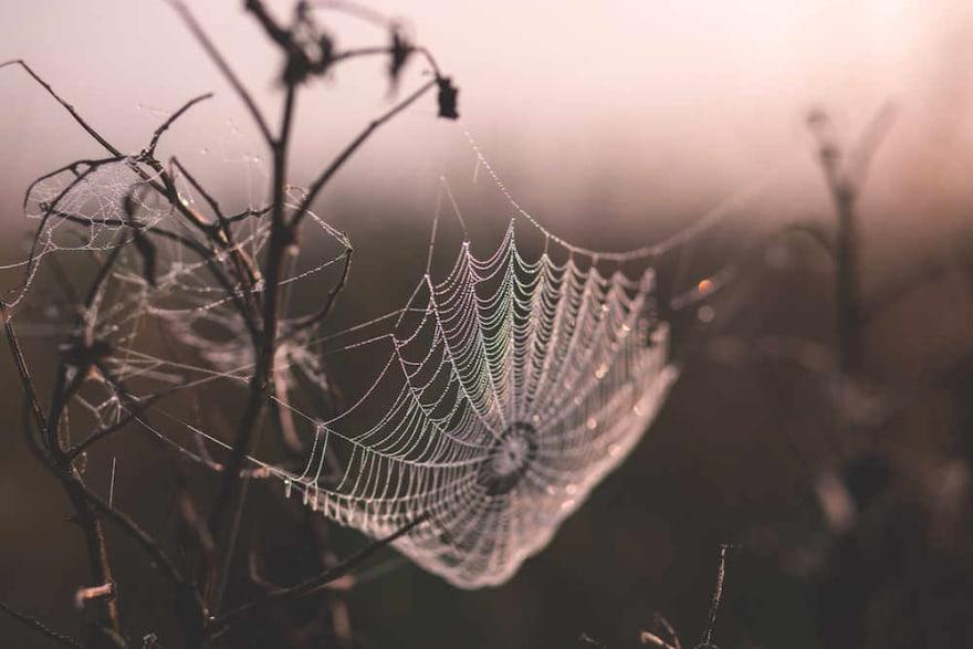 A spider web glistening with dew