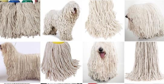 dog or mop