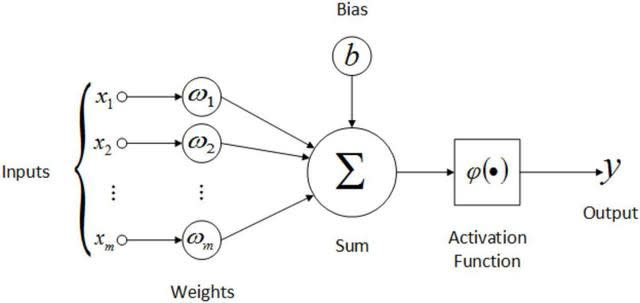 weight and bias in the neural  network