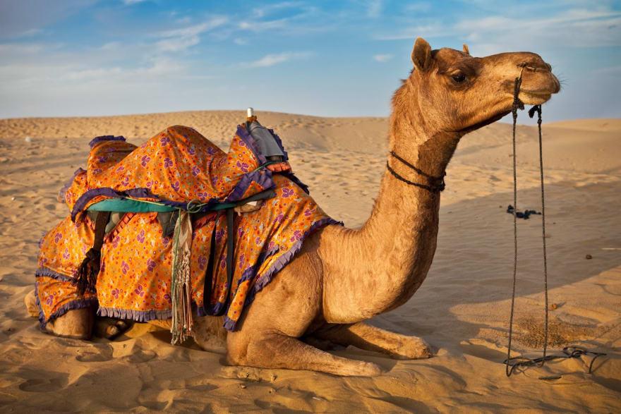 Camel Case image