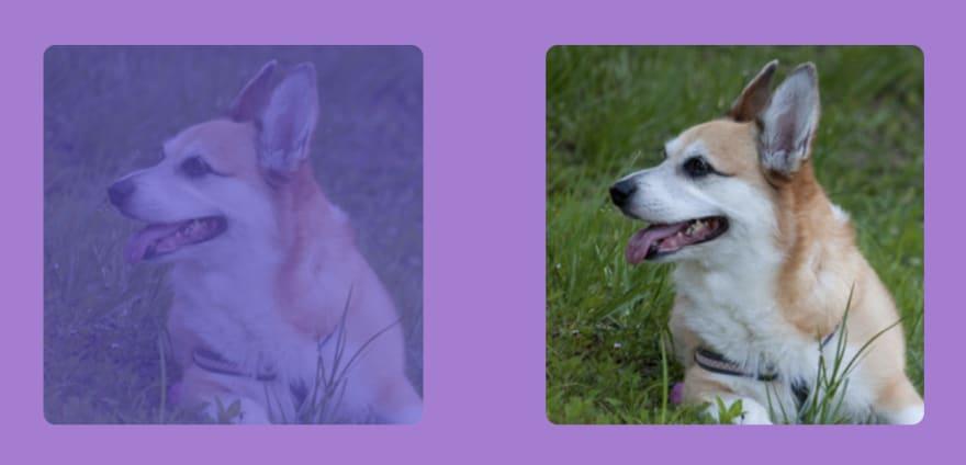 screen comparison images