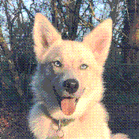 dog image reduced to 64 colors and dithered