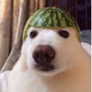 imcanada profile picture