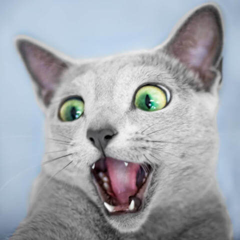 A shocked cat