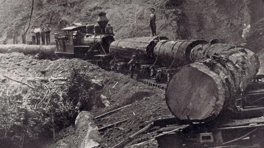 Logging lumberjack 03