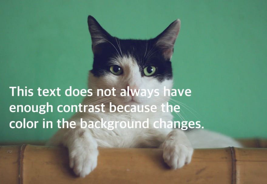 Picture of a cat with the caption: this textdoes not always have enough contrast because the color in the background changes.