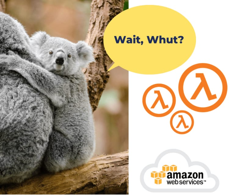 """Lambda Koala saying """"Wait Whut"""""""