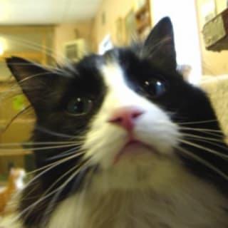 griffin-stewie profile picture
