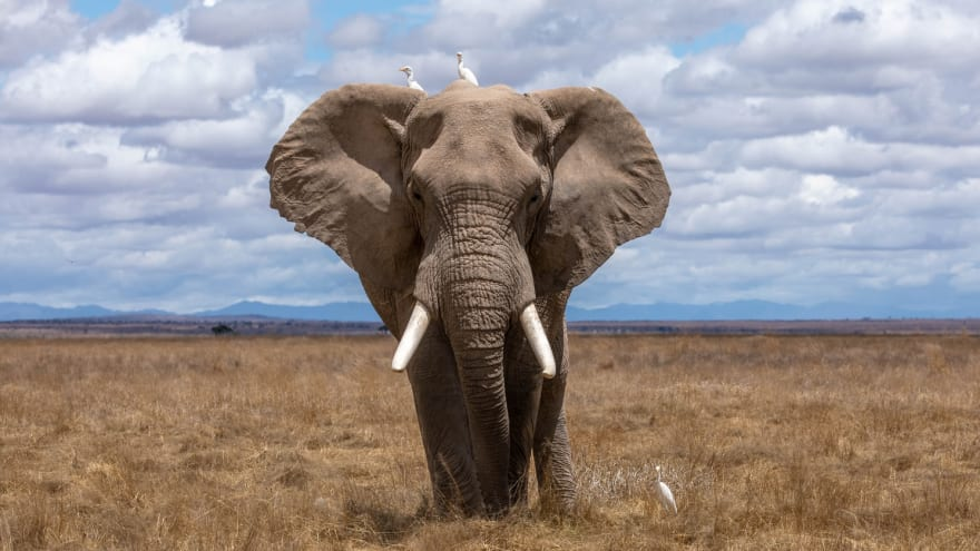 a postgres SQL like elephant