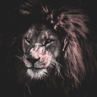 Suprim Golay profile picture