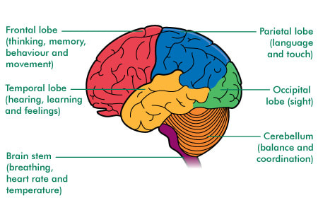 Different parts of the brain (source: macmillan.org.uk)