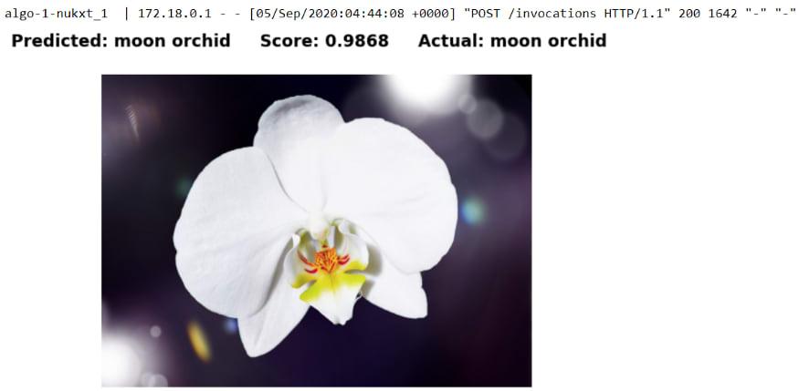 MoonOrchid