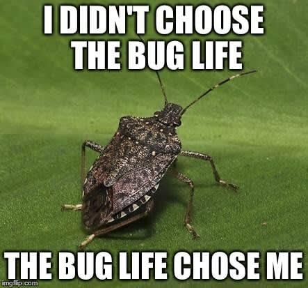 Bug meme