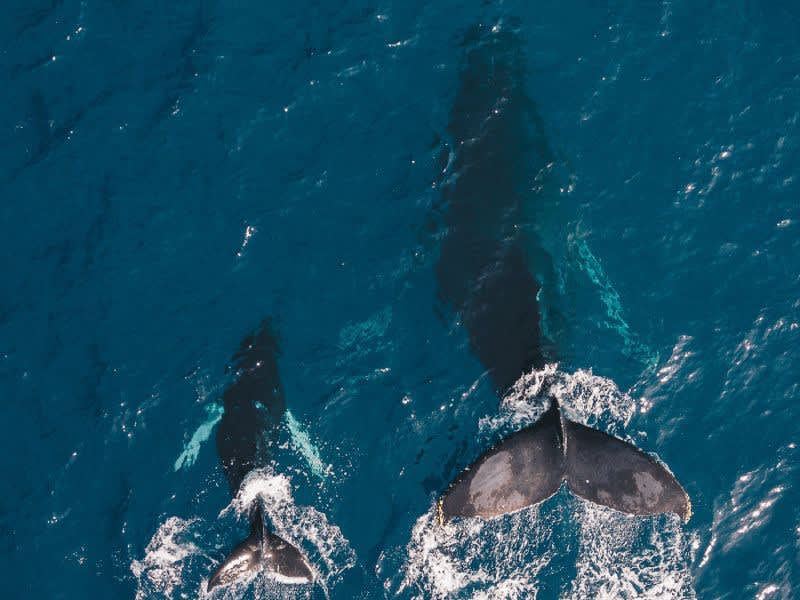 Whale Image on [Unsplash](https://unsplash.com/photos/PO0UHx-5mHo)