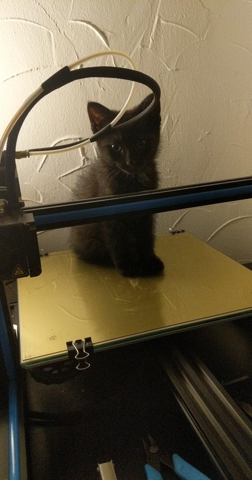 Kitten on a 3D Printer