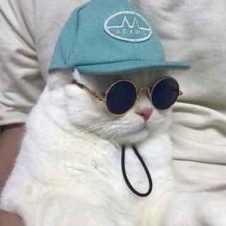 👑 profile picture