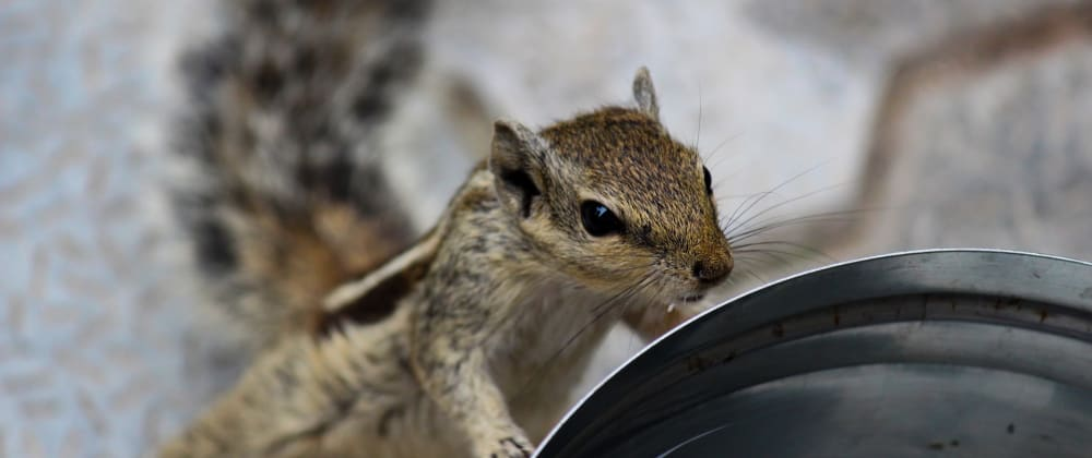 Cover image for Building a water-drinking reminder with Next.js and Quirrel