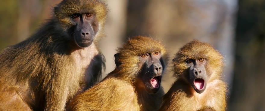 Shocked Animals