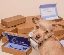 Image of dog and packages