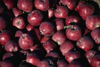 red delicious apple#source%3Dgooglier%2Ecom#https%3A%2F%2Fgooglier%2Ecom%2Fpage%2F%2F10000