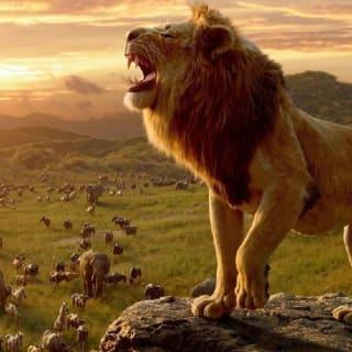 Lakshya Singh profile picture