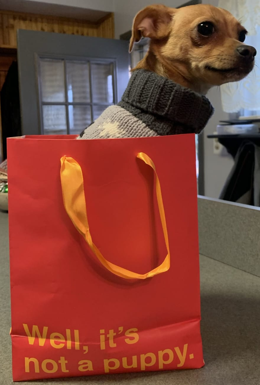 puppy in a gift bag