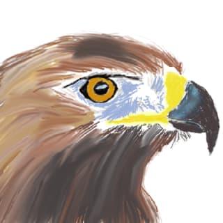 Hawk Chen profile picture
