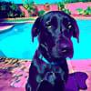 blankey1337 profile image