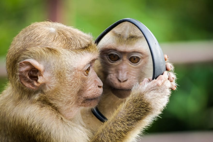 Monkey staring at itself in the mirror