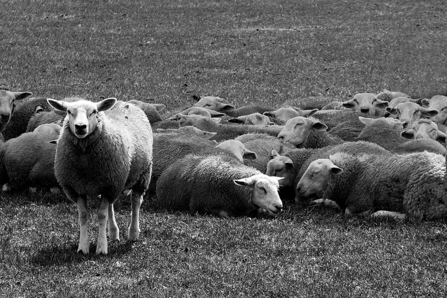 Whilst on a walk in the Dorset countryside this Summer, I came across a field with sheep in it.  All but one of the sheep was lying down in the heat of the day.  I just thought, what a great photo that sums up being different or standing out in the crowd.  It is a great analogy for life, do you want to be part of the flock or stand out as being different?  The choice is yours and yours alone.  As an international conference speaker, I always like to stand out!!