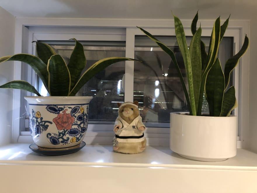 Kungfu Hamster and Plants