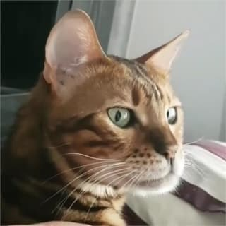 eIektro profile picture