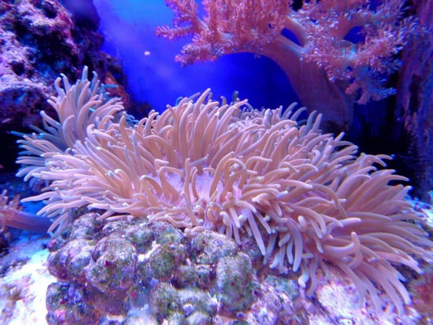 an-anemone
