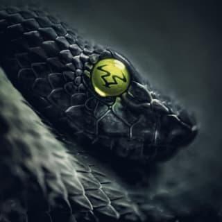The Black Mamba🔥 profile picture
